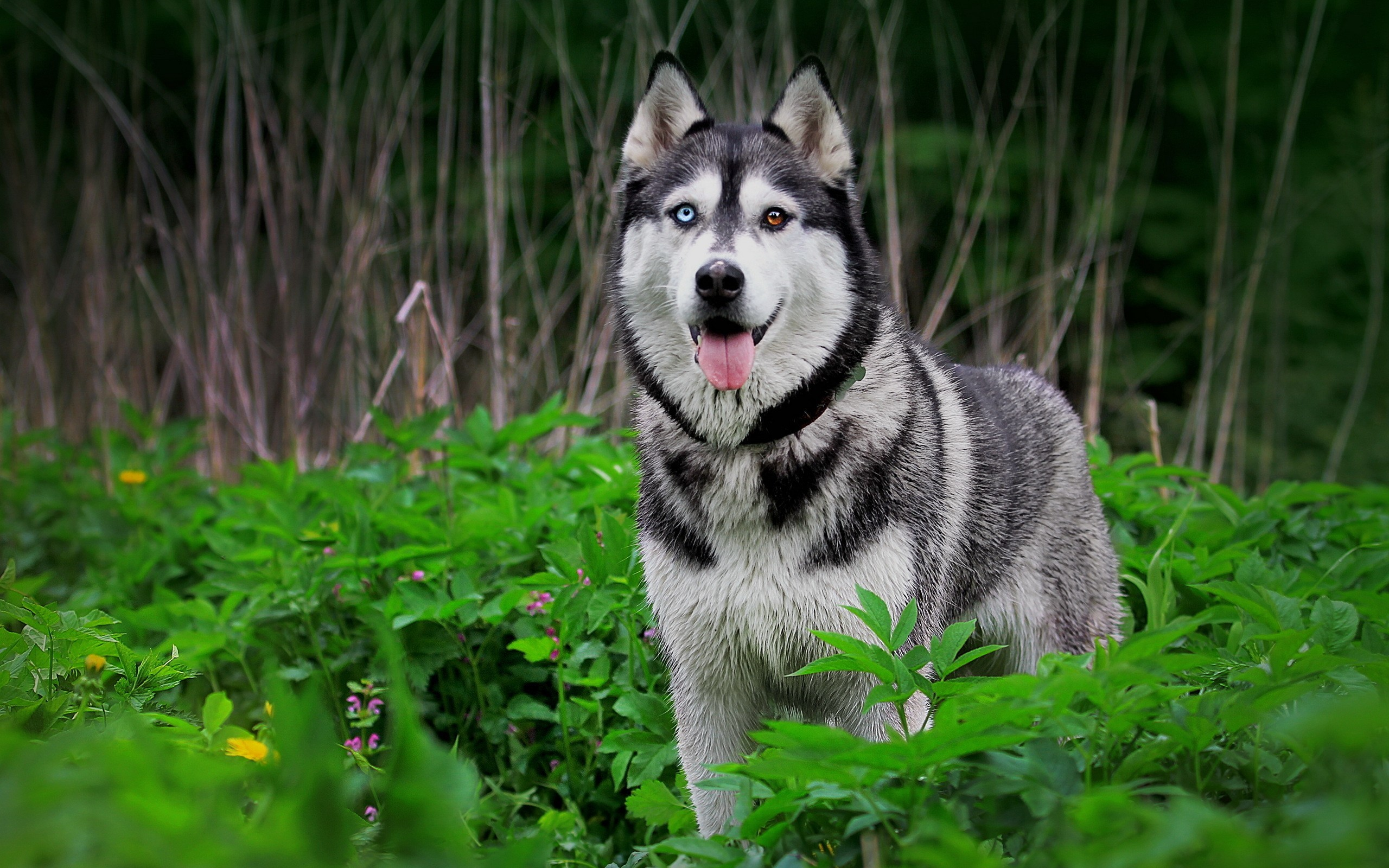 Nature forest animals dogs plants husky wallpaper | | 13630 |  WallpaperUP