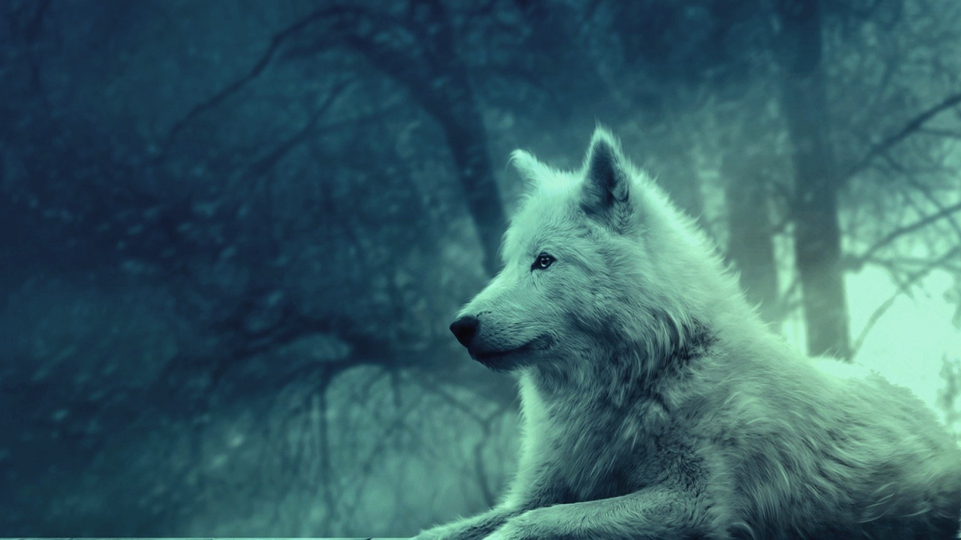 Preview wallpaper wolf, light, forest, wild, calm, peace 1920×1080