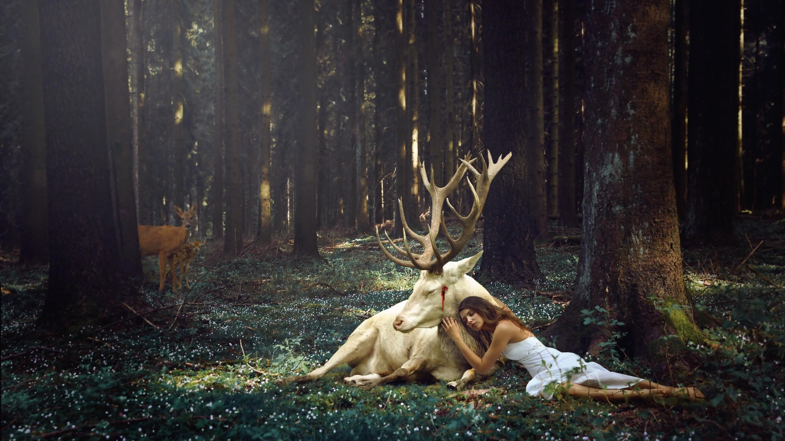 Forest Animal & A Cute Girl HD Wallpaper