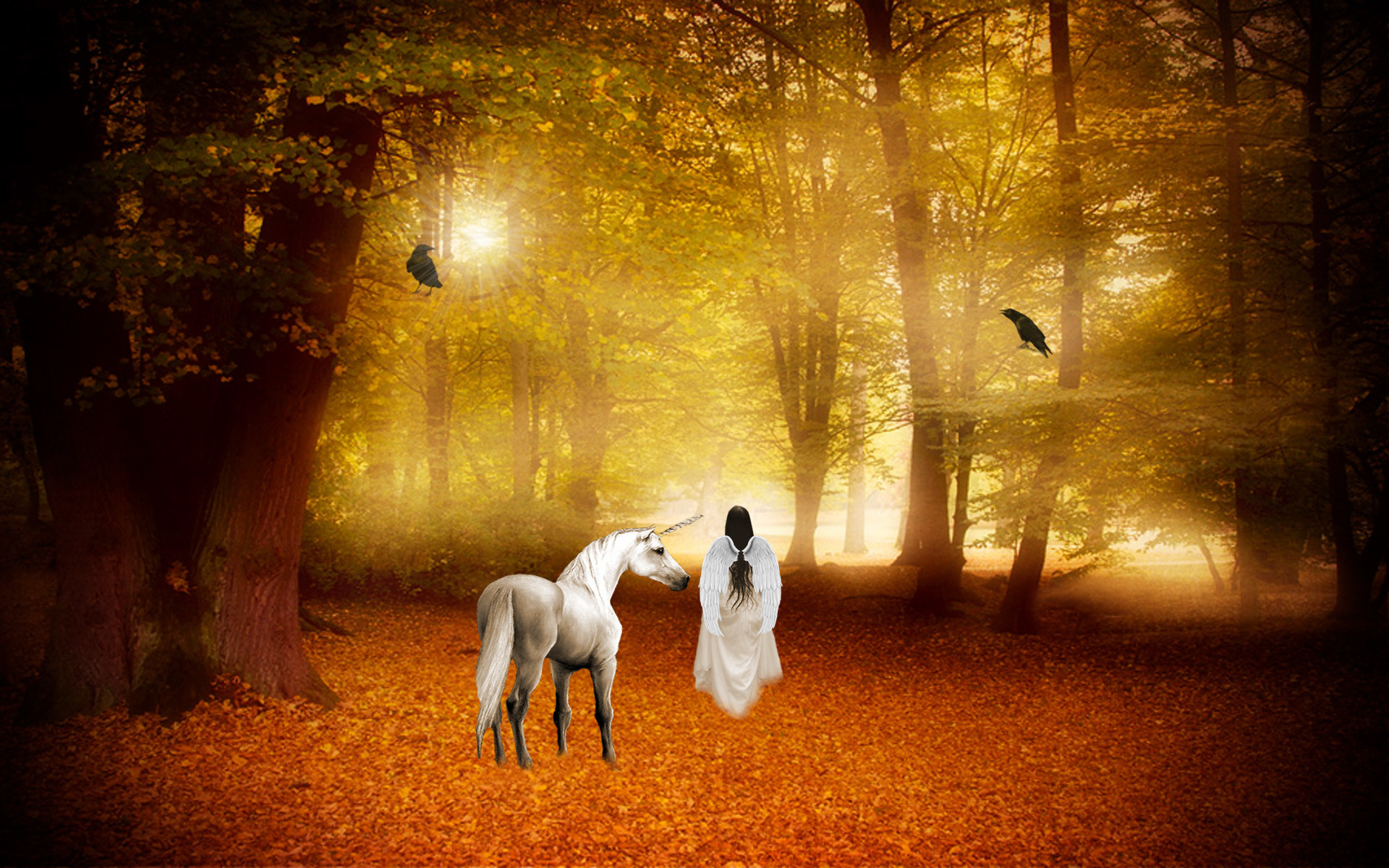horse magical animal angel fairy autumn forest g wallpaper background .