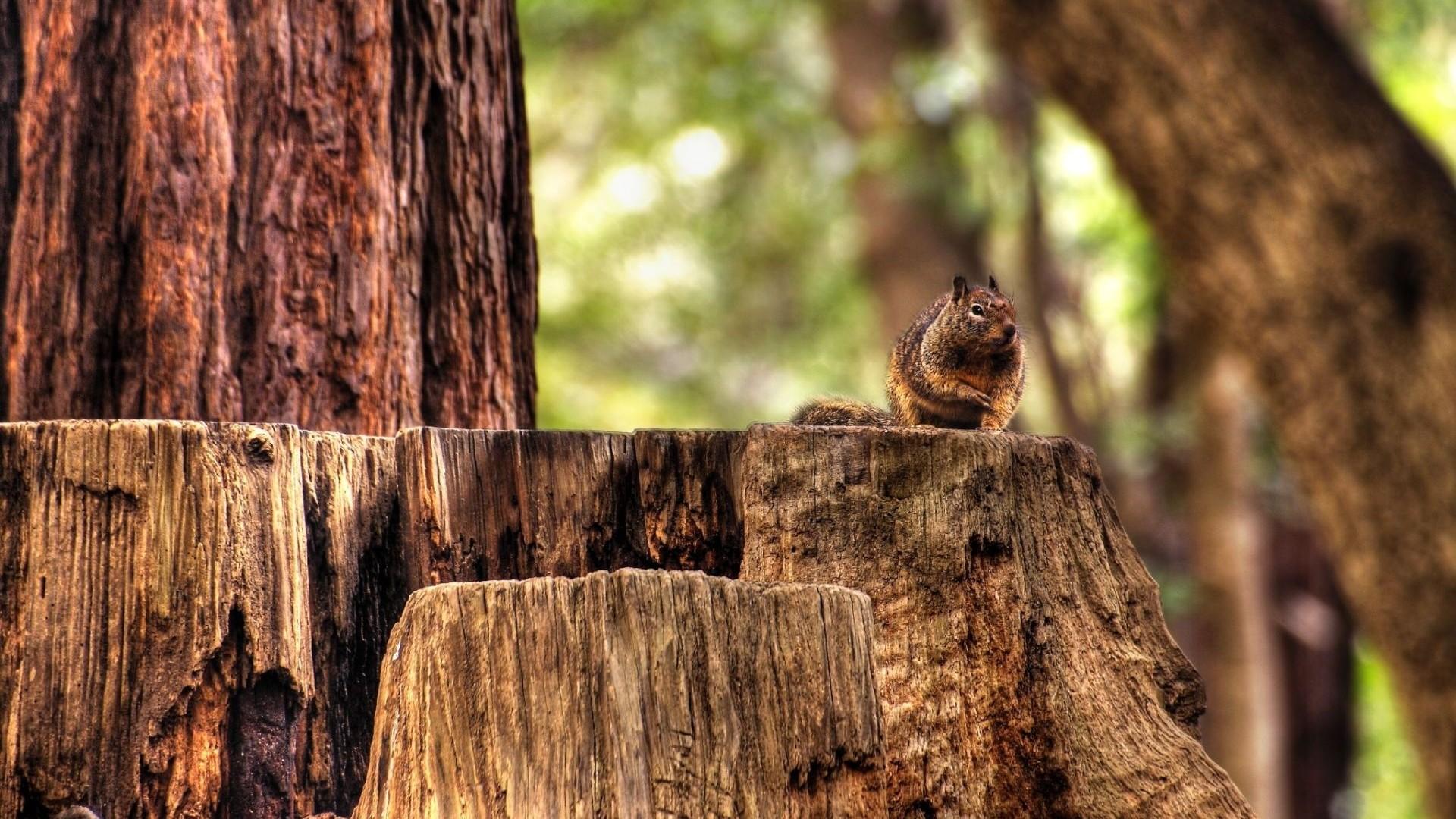 Wallpaper squirrel, hemp, sitting, animal, forest