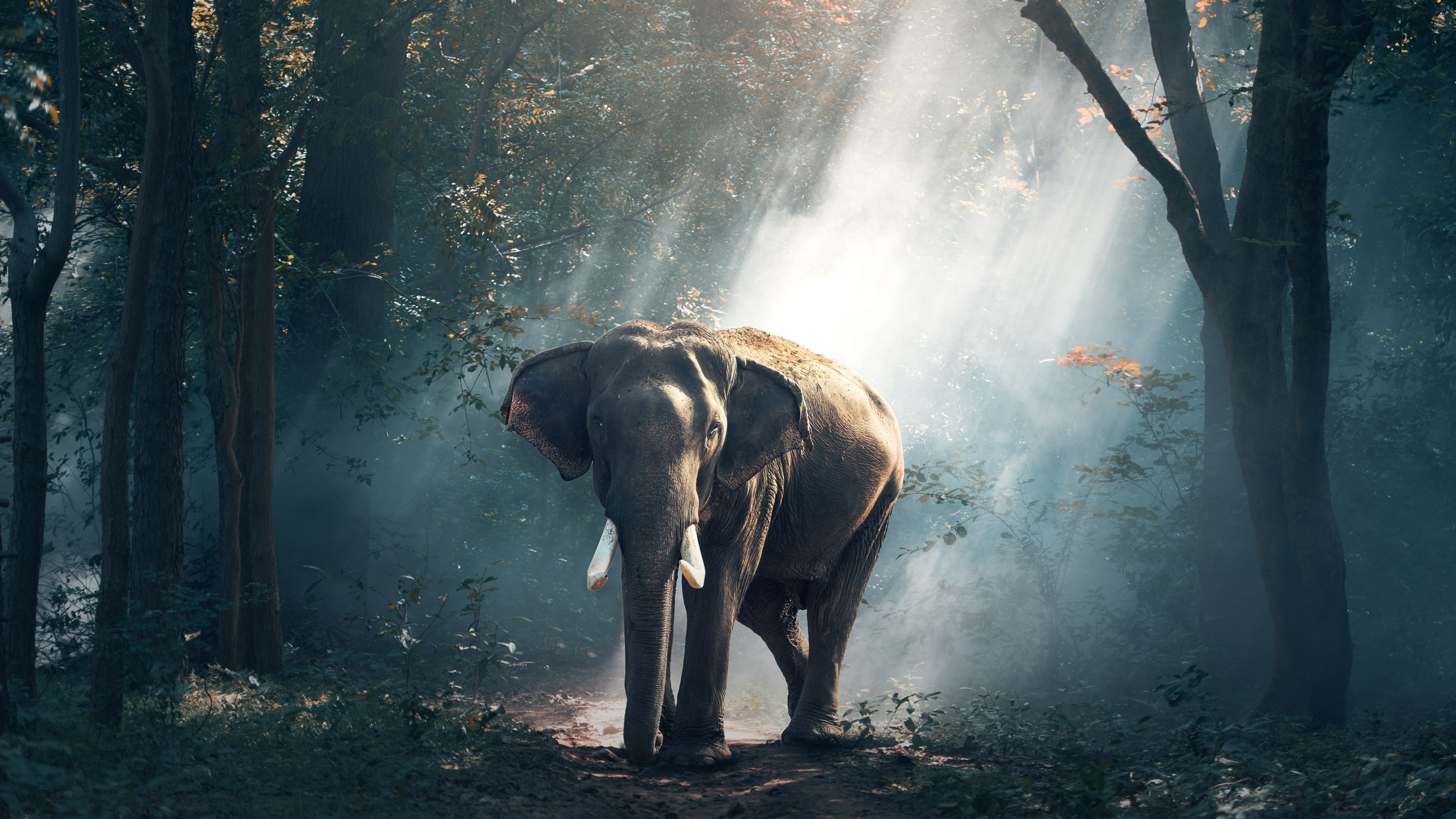 Tags: Elephant, Forest …