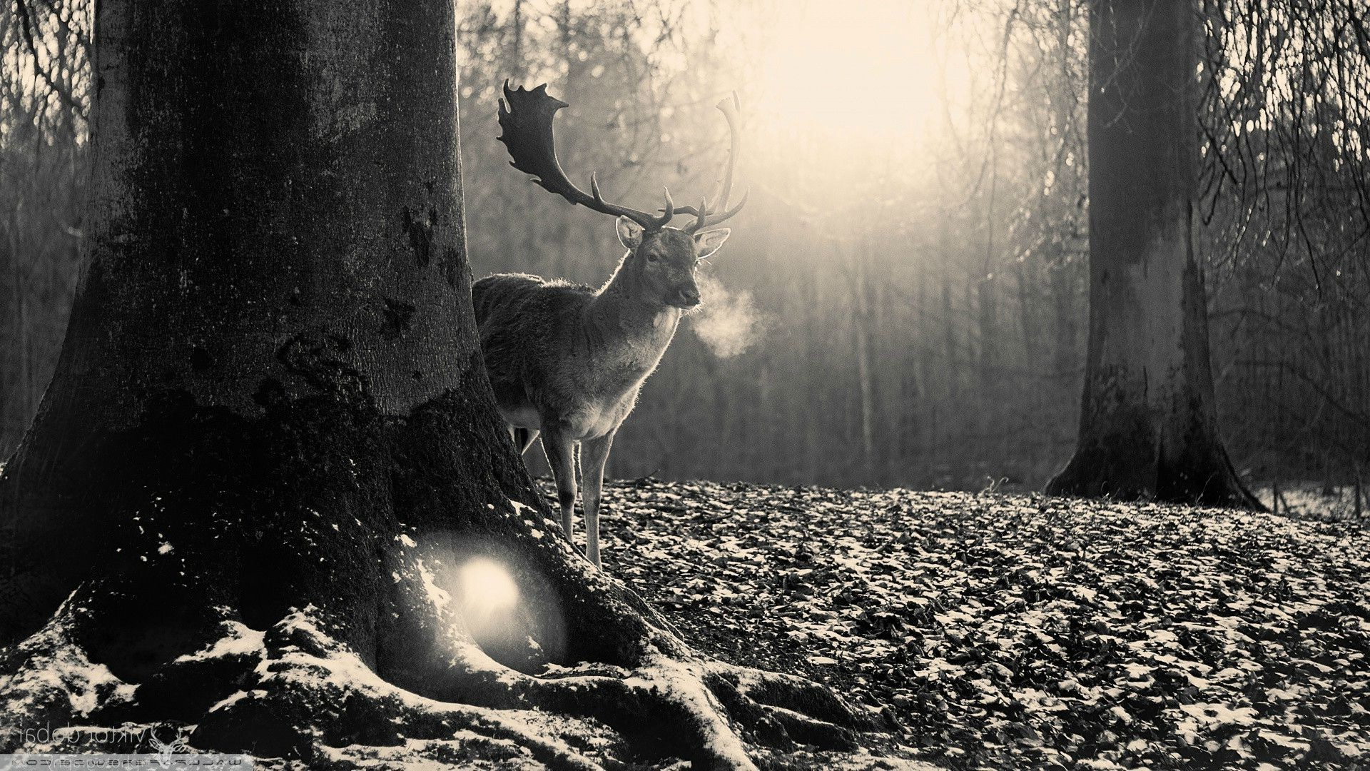 forest Clearing, Forest, Animals, Deer, Elk Wallpapers HD / Desktop and  Mobile Backgrounds
