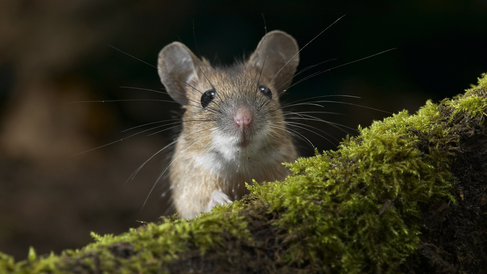 nature, Forest, Rats, Animals Wallpapers HD / Desktop and Mobile Backgrounds