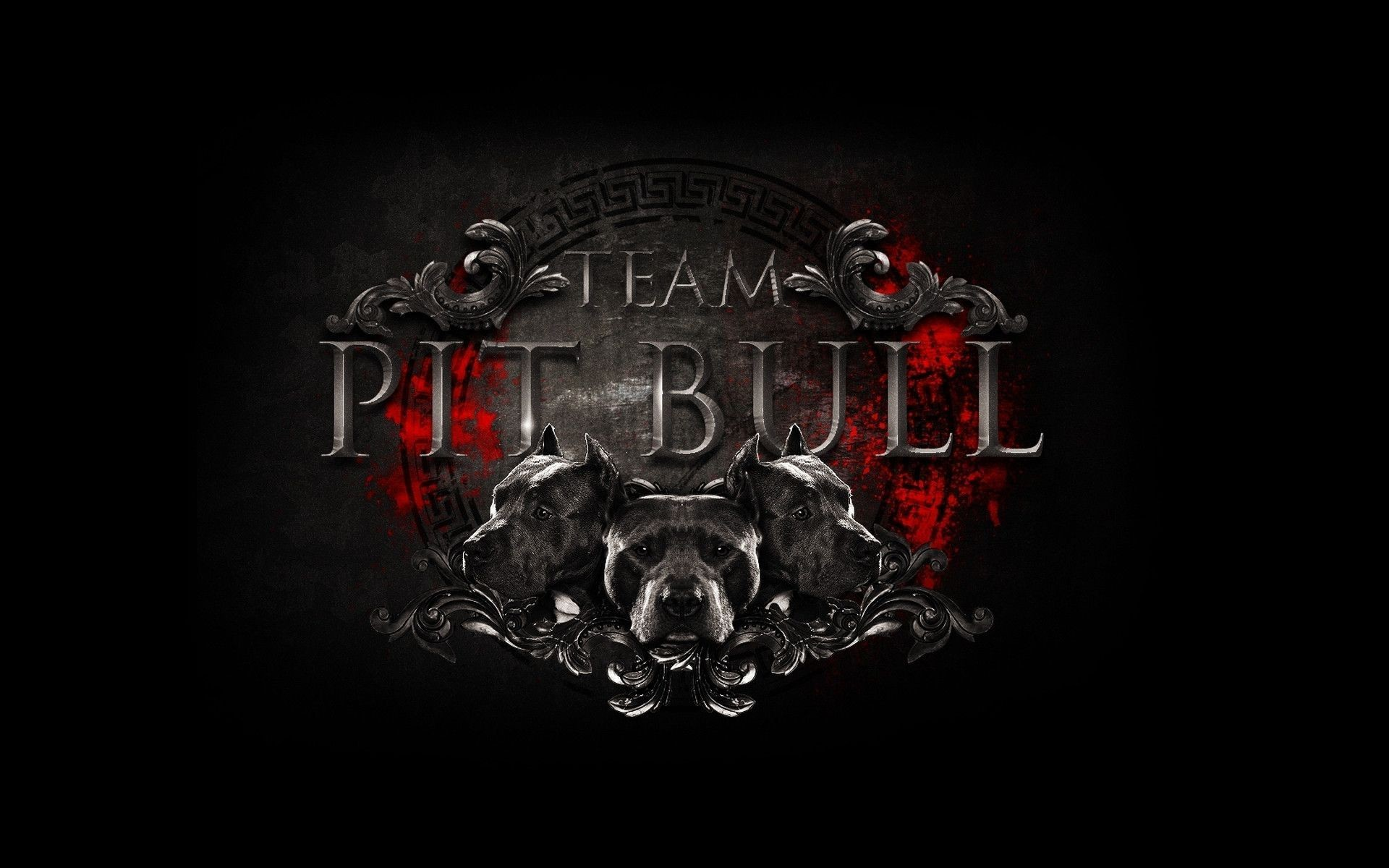 Pit Bull HD Wallpapers Backgrounds Wallpaper 1920×1200 Pitbull Wallpaper  (41 Wallpapers) |