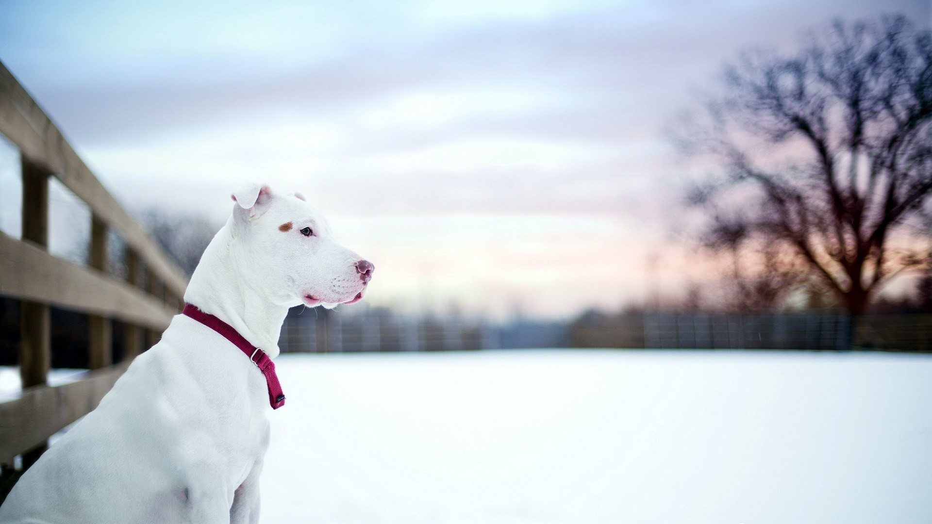 dogs wallpapers pictures. Â«Â«