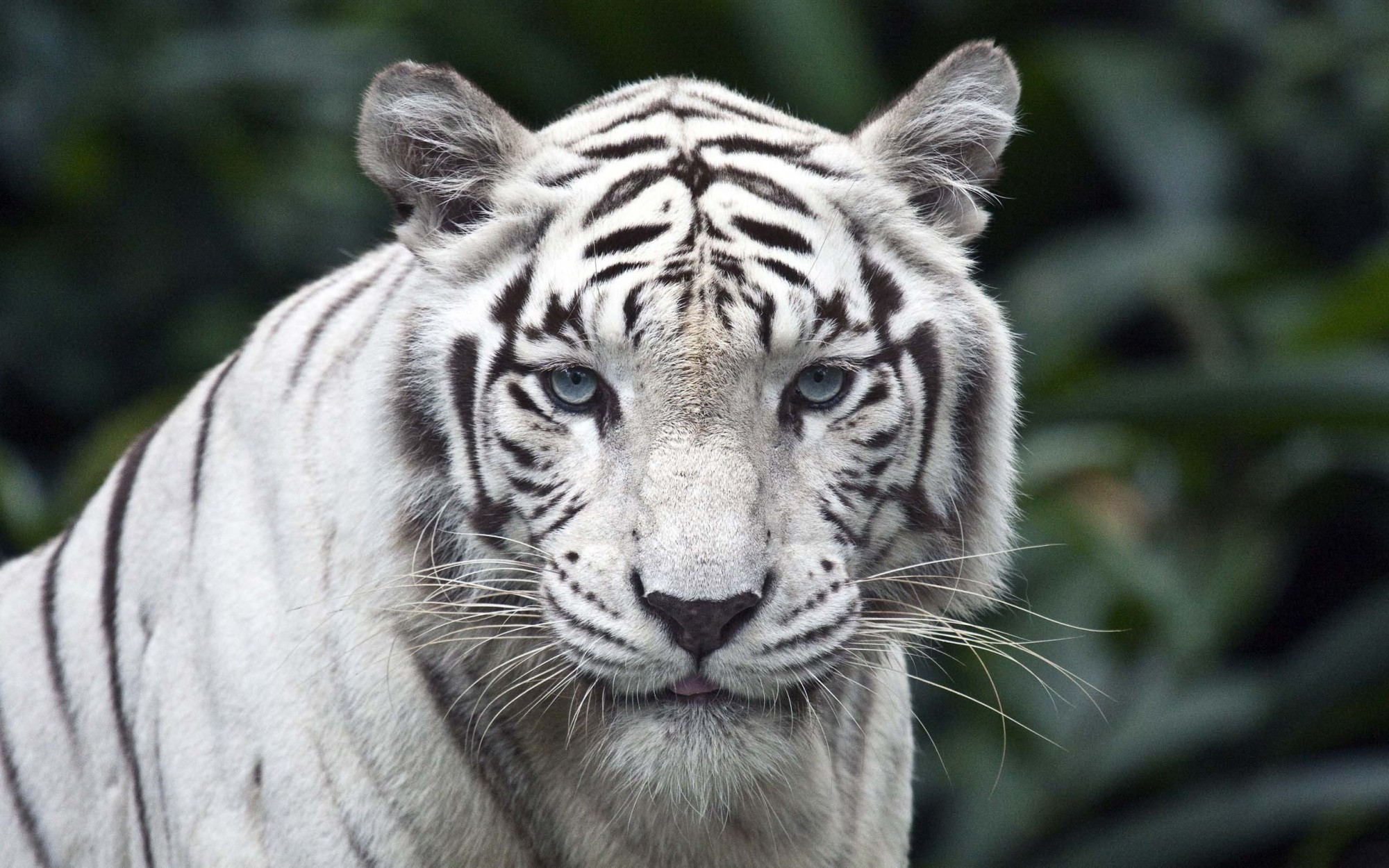 … 30 Amazing Animal Wallpaper Full HD …