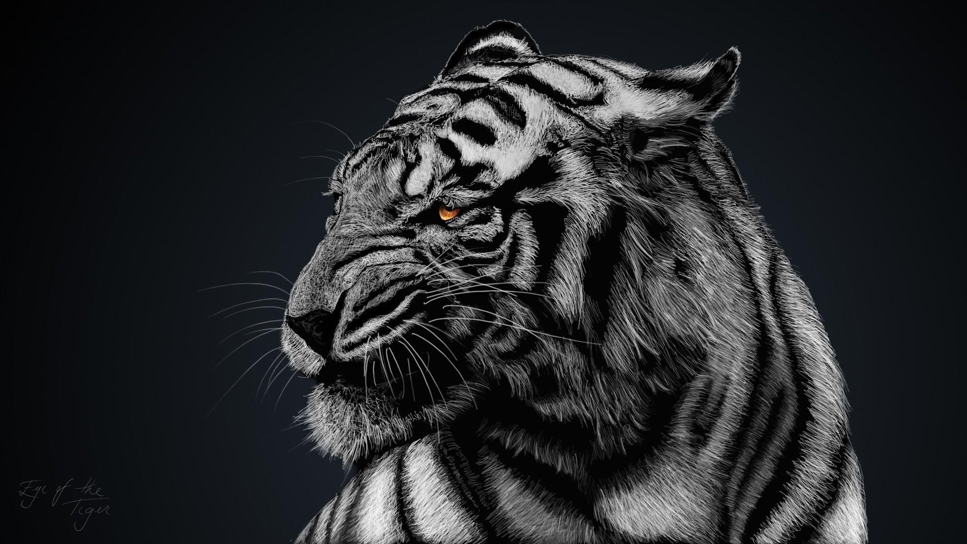 HD Wallpaper   Background ID:418656. Animal White Tiger