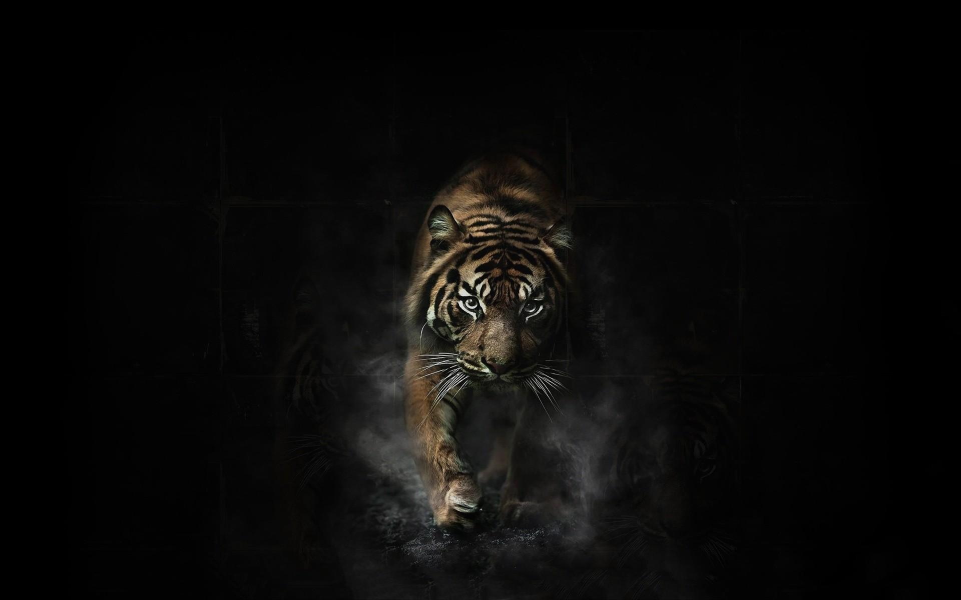 Tiger Wallpapers Best Wallpapers 1920×1200 Tigar Wallpapers (32 Wallpapers)    Adorable Wallpapers