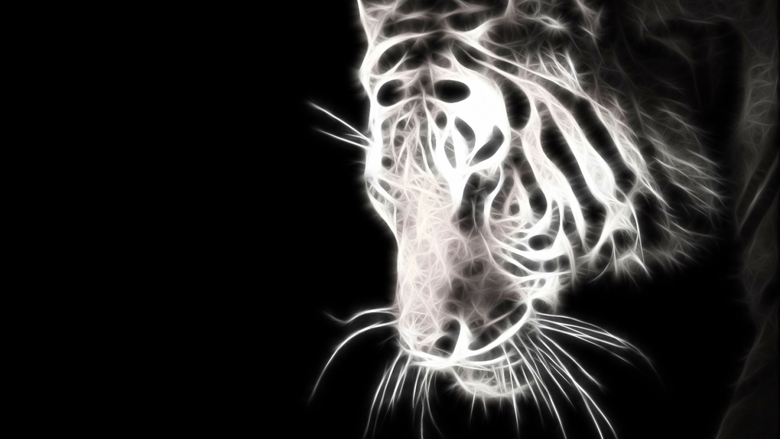 funny baby white tiger – 1080 HD Wallpaper