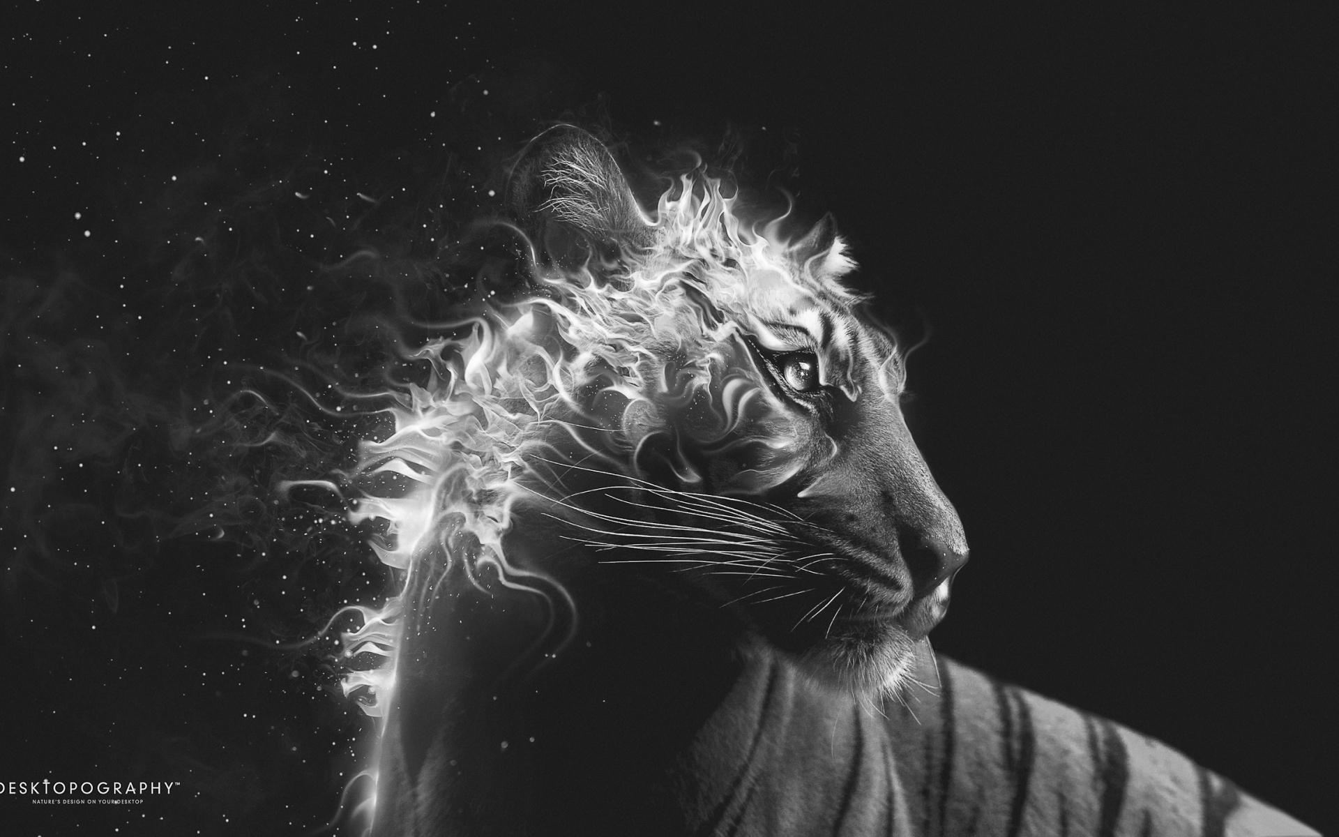 Creative & Graphics Black And White Tiger Fire Wallpaper. Black .