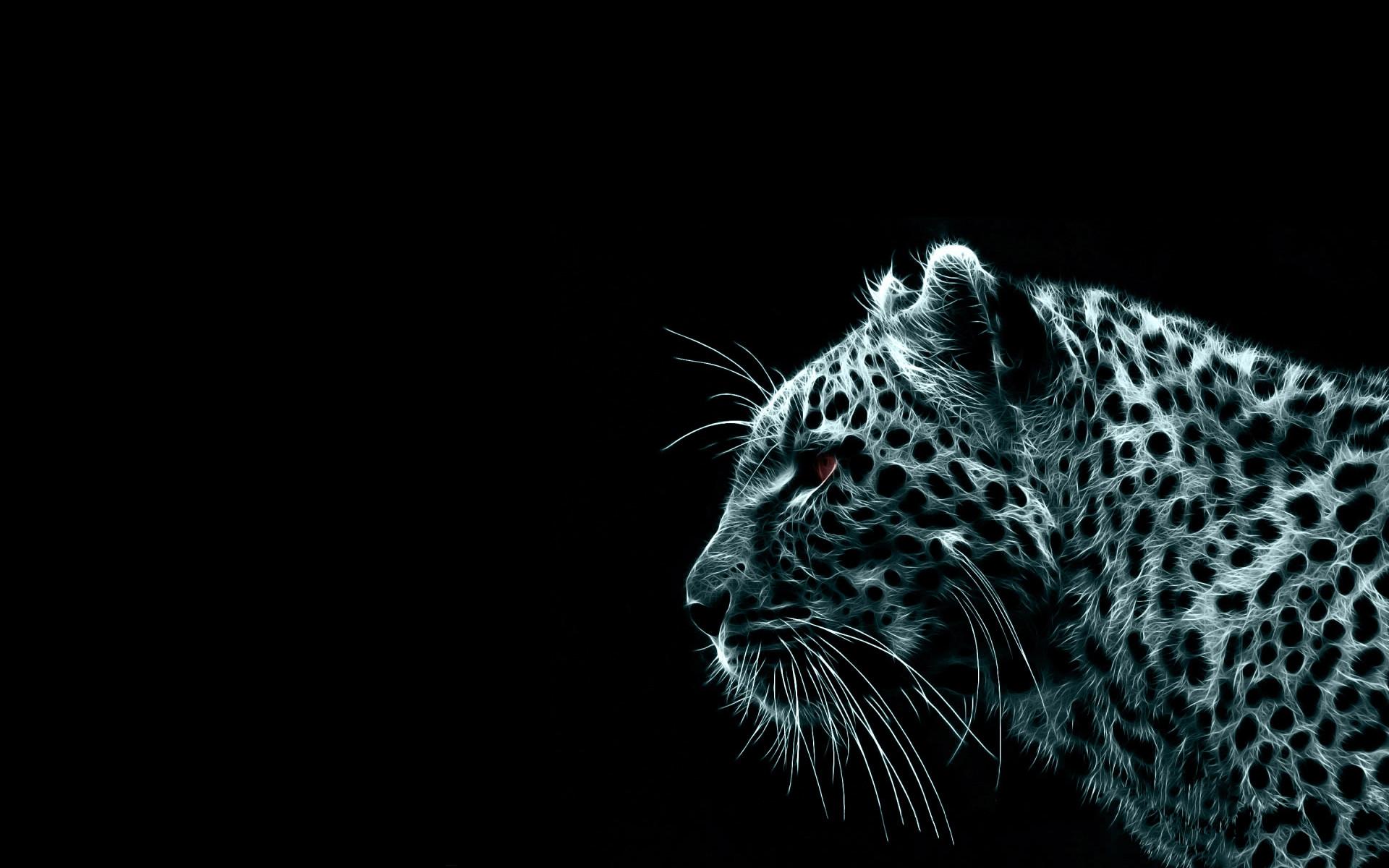 Tiger Wallpaper Black Background