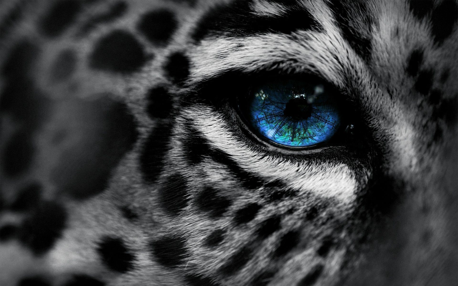 colour n black n white animals – Bing Images