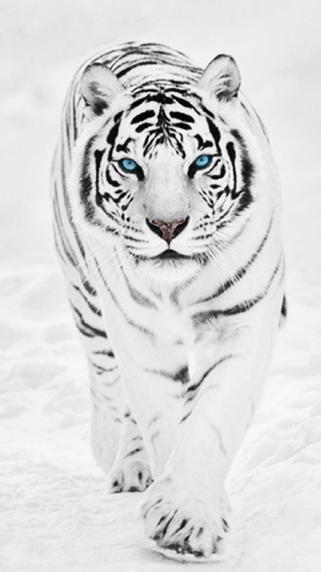 Siberian Tiger Wallpapers – Wallpaper Cave   Best Games Wallpapers    Pinterest   Tiger wallpaper and Wallpaper