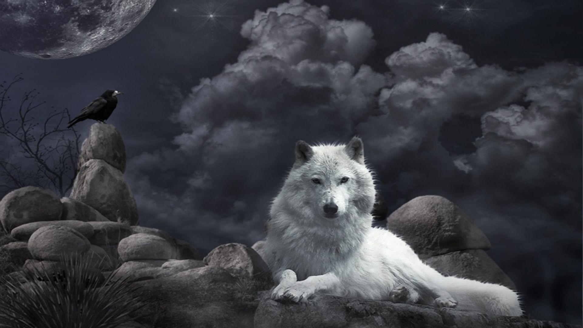 Baby Wolf – wallpaper.