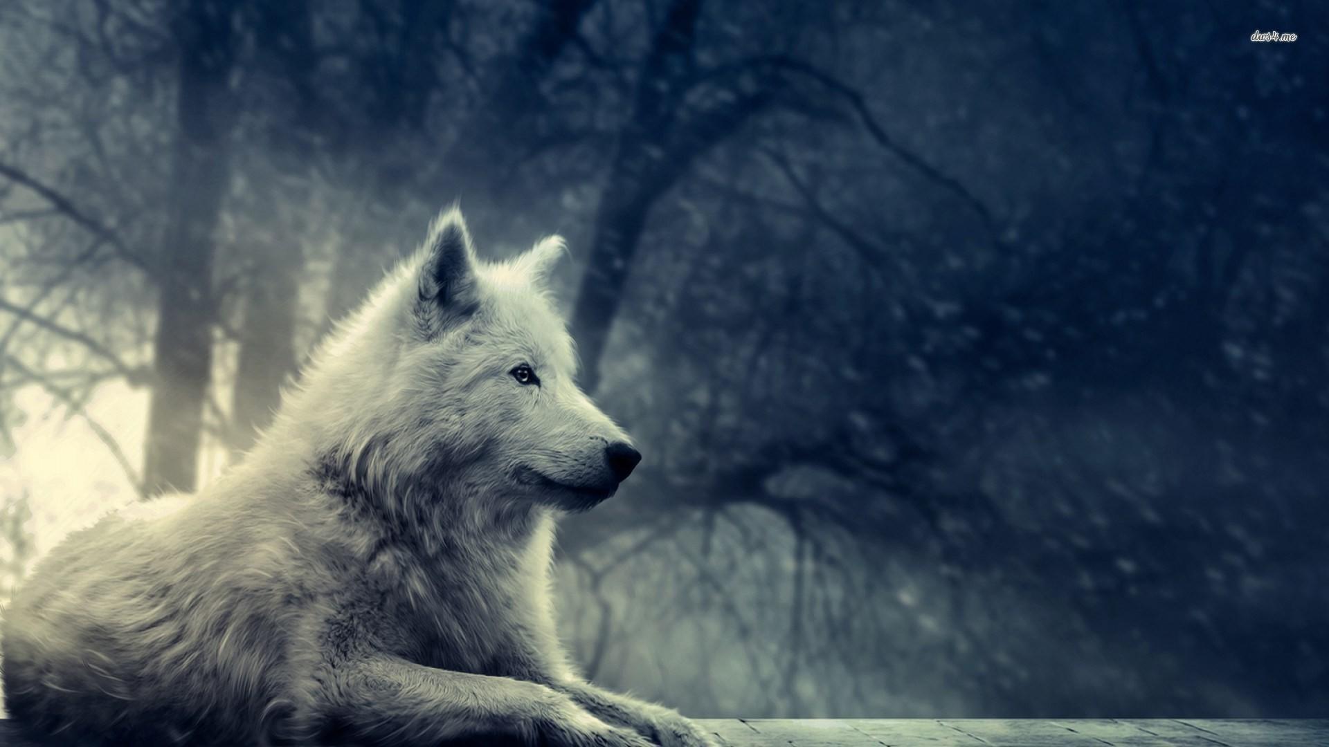 Winfred Nail – wolf art wallpaper for desktops – 1920 x 1080 px