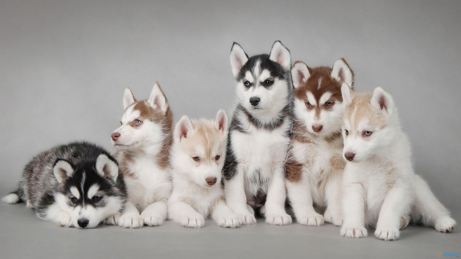Desktop Wallpaper Puppies The Cutest Puppies | HD Wallpapers | Pinterest |  Hd wallpaper, Wallpaper and Wallpaper backgrounds