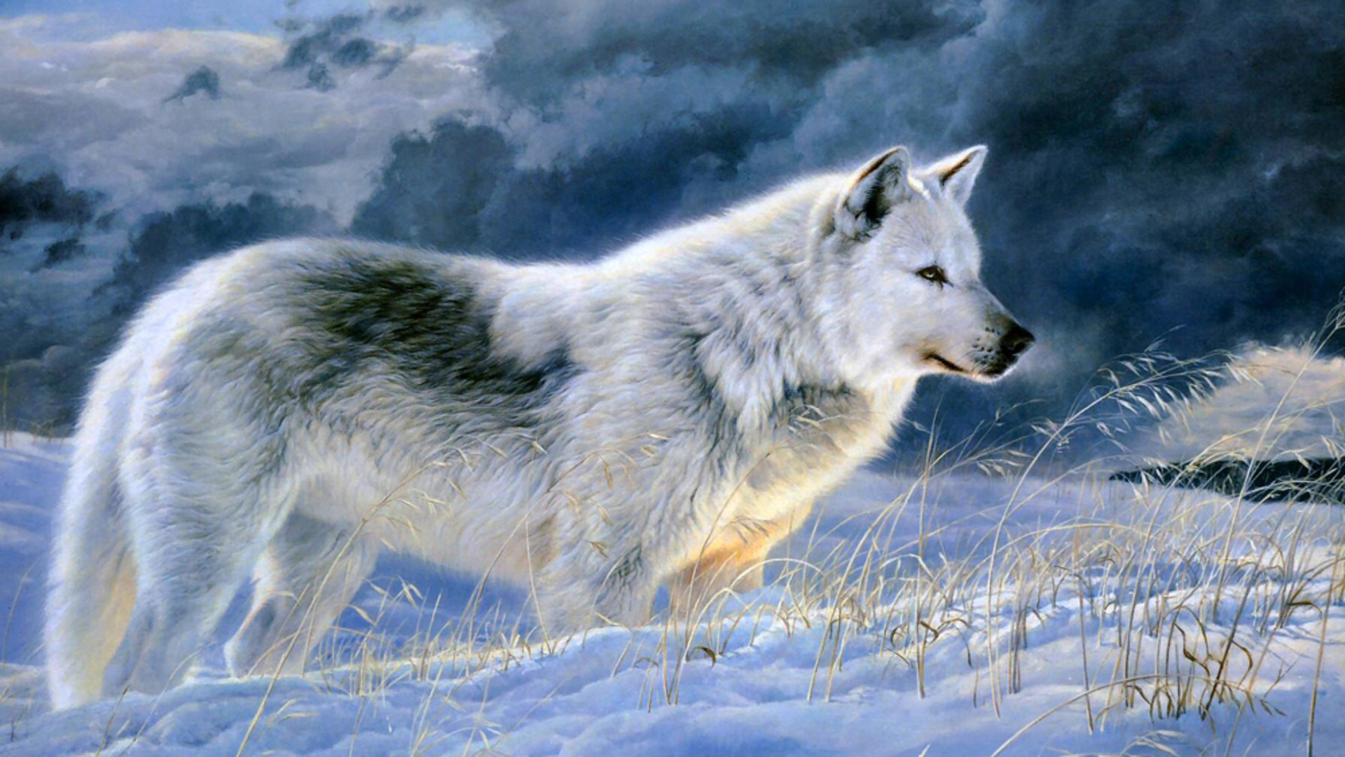 baby gray wolf pics download