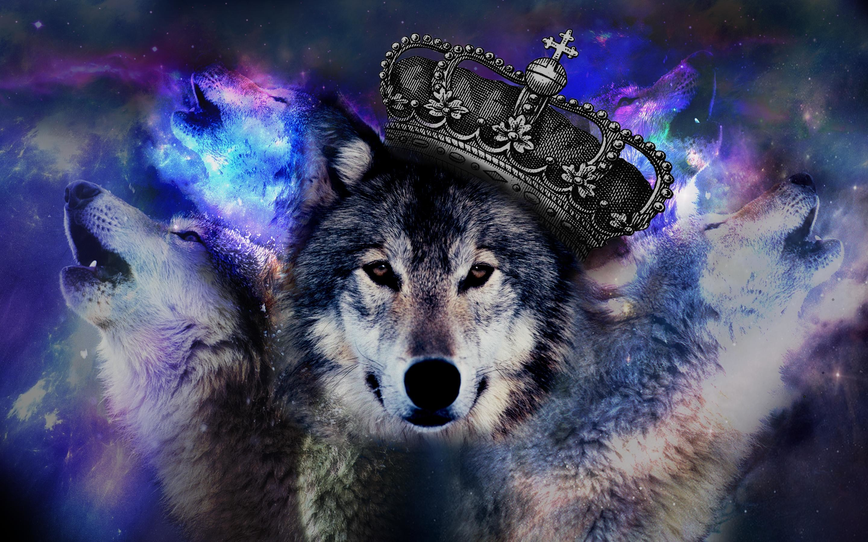 Pix For > Psychedelic Wolf Wallpaper