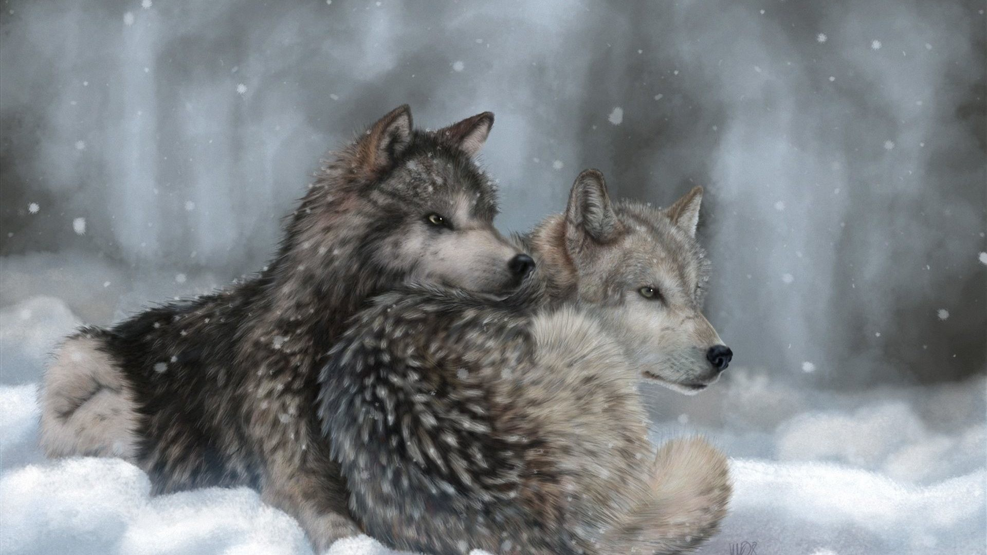 Dogs – Wolves Art Winter Lying Wolf Snow Dogs Surfing Images for HD 16:9