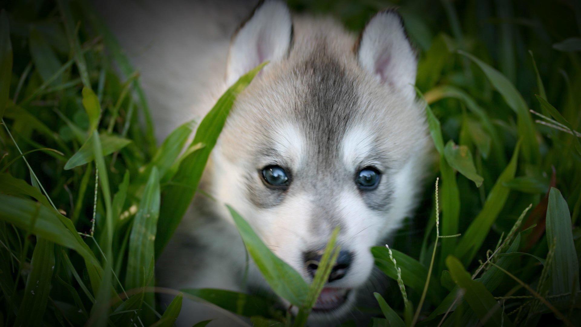 Cute Baby Wolf Wallpaper – WallpaperSafari