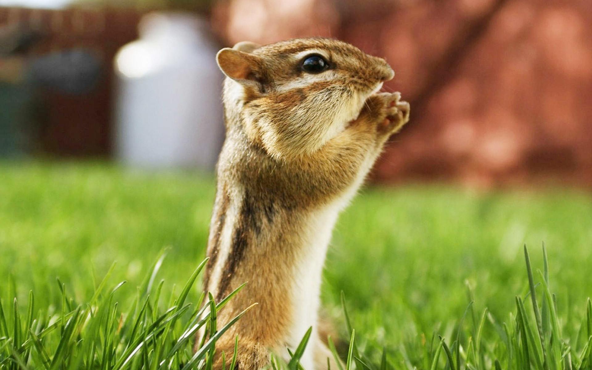 Beautiful Animals Wallpapers HD Desktop Widescreen Free Download .