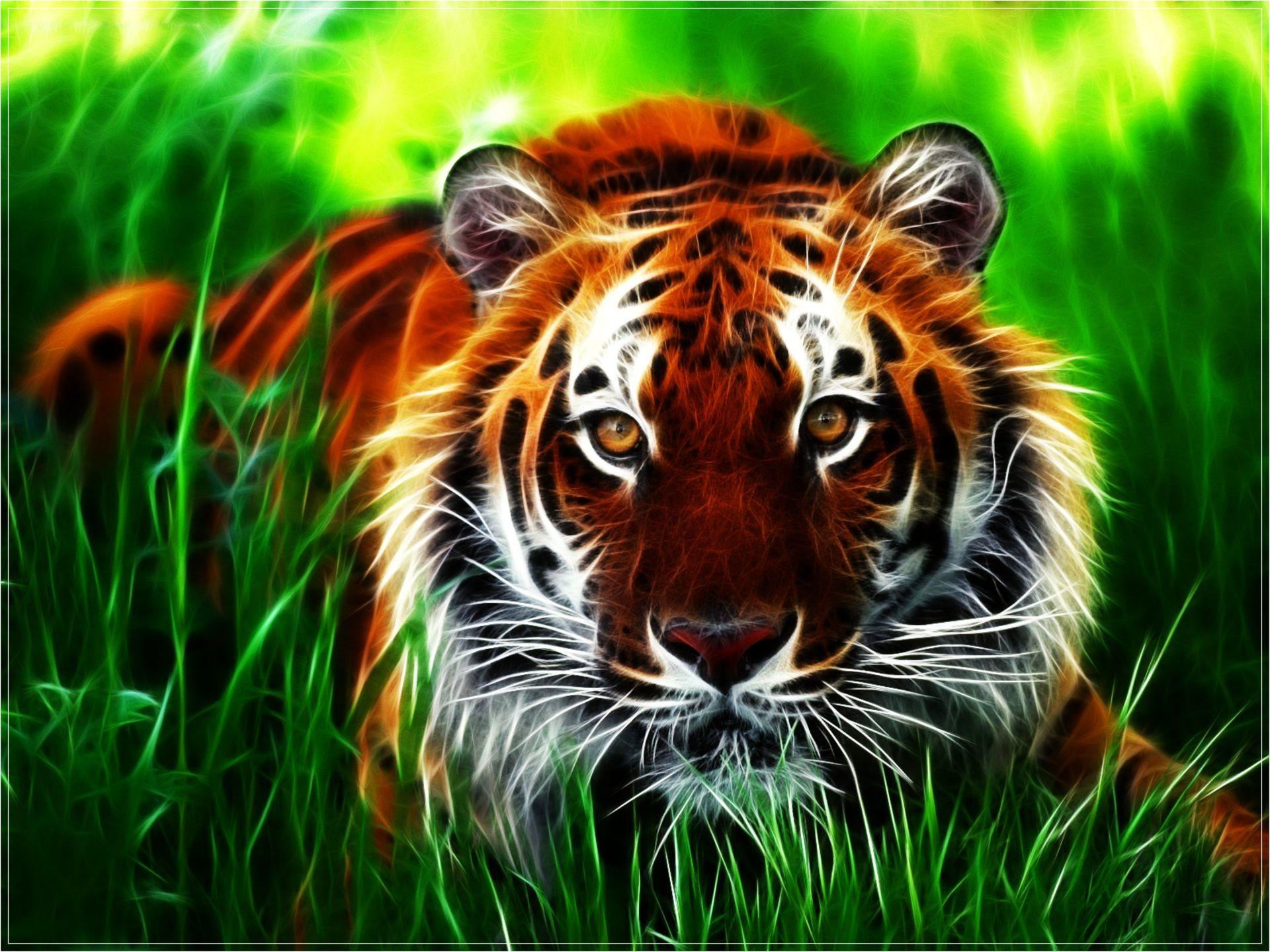 HD Wallpapers Animals   HD Wallpapers Backgrounds of Your Choice