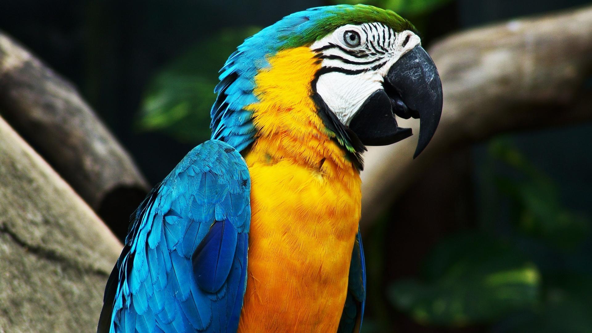 Volorful-parrot-animal-wallpaper-HD