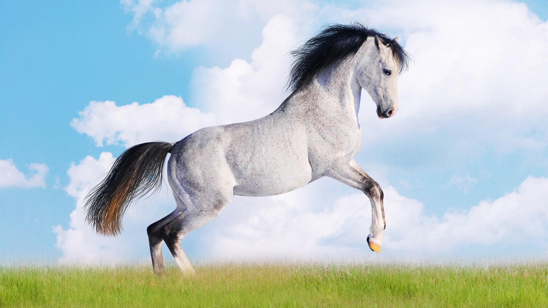 Beautiful Animal HD images