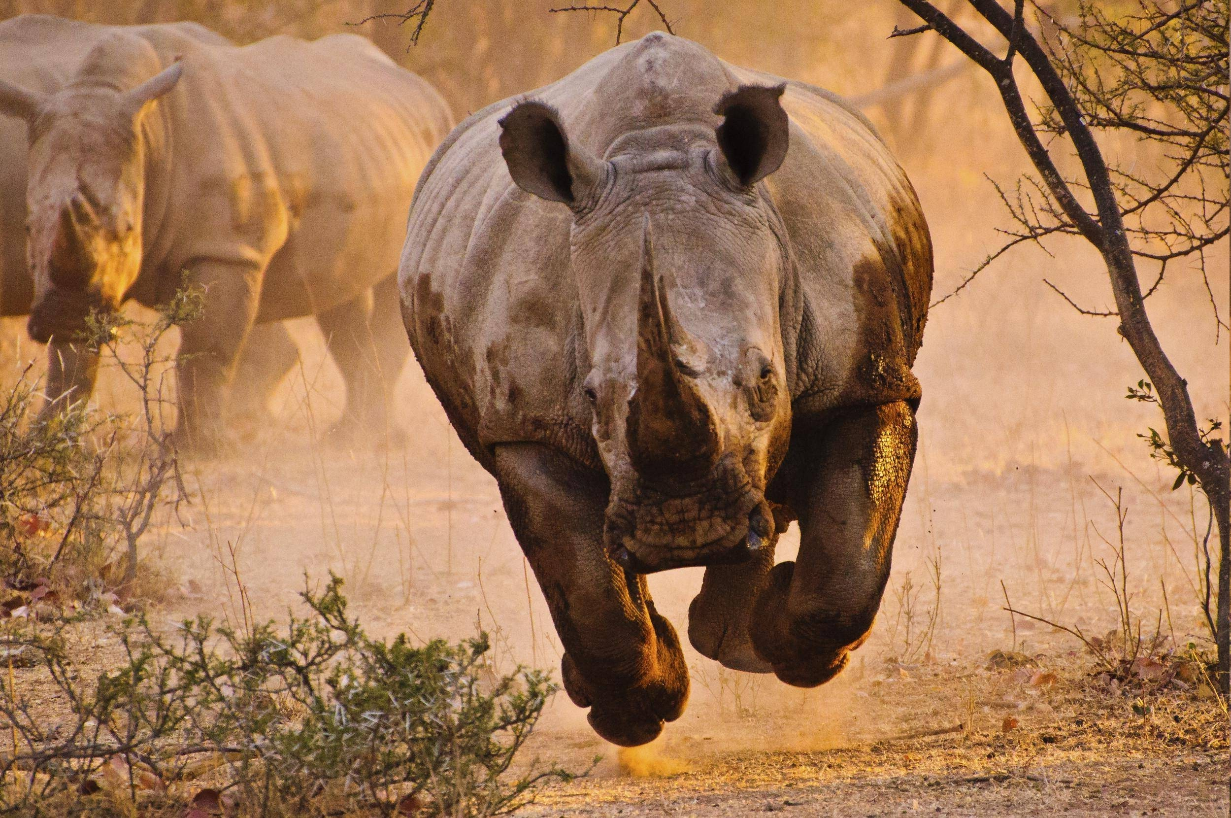 rhino, Nature, Animals Wallpapers HD / Desktop and Mobile Backgrounds