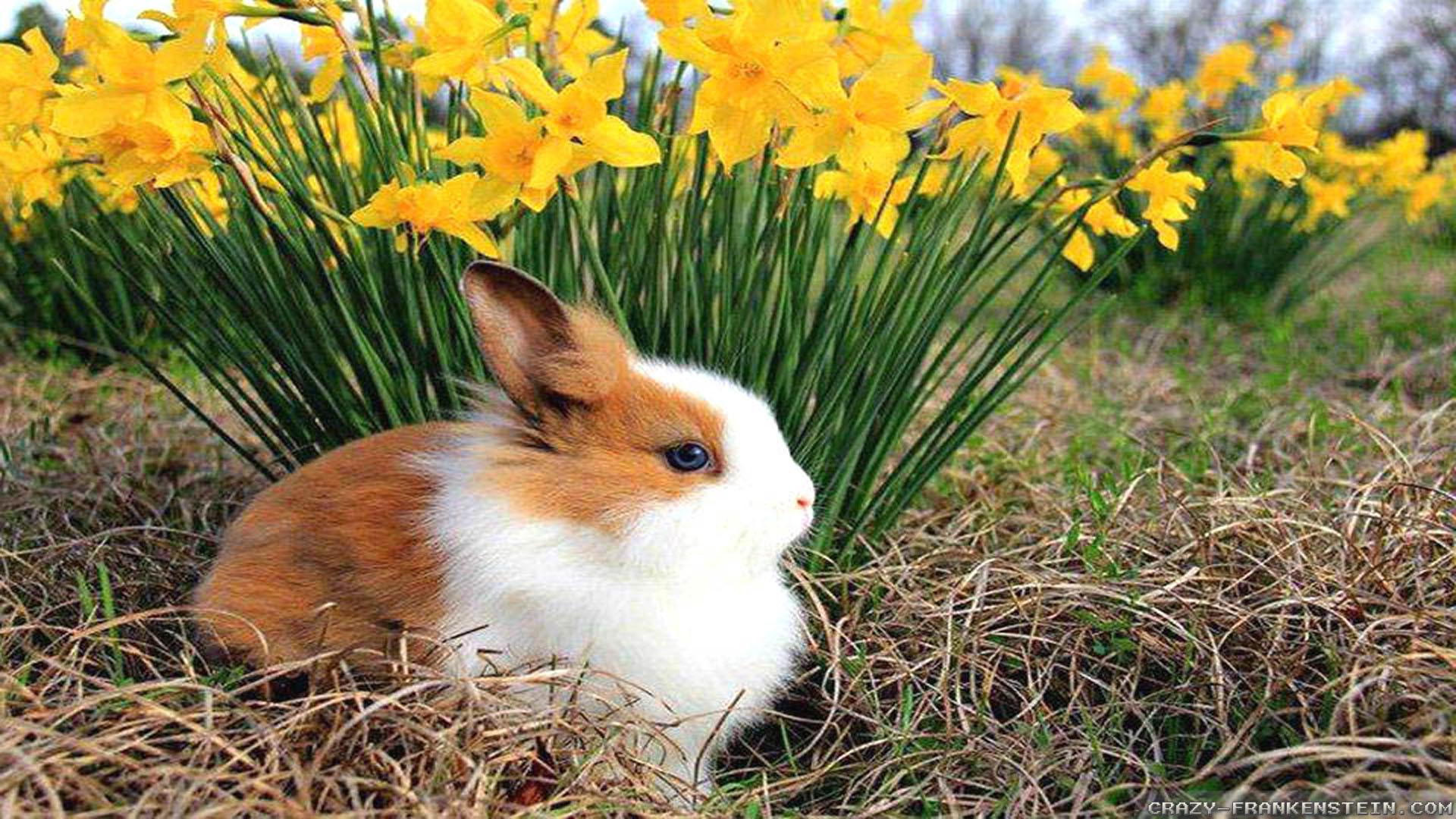 Spring Animal HD Desktop Wallpapers 7647 – HD Wallpapers Site