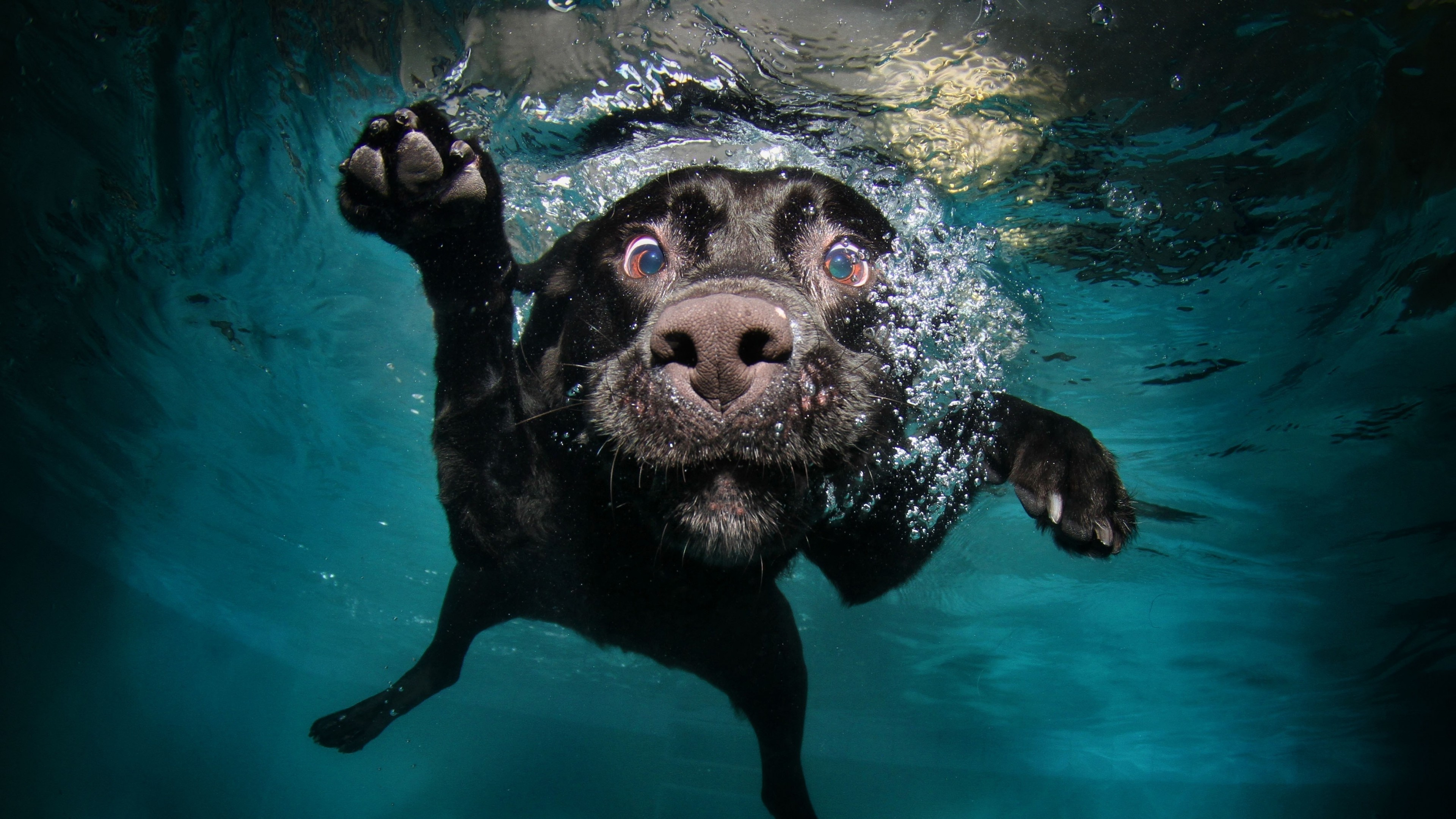 Preview wallpaper dog, black, underwater, swimming, water 3840×2160