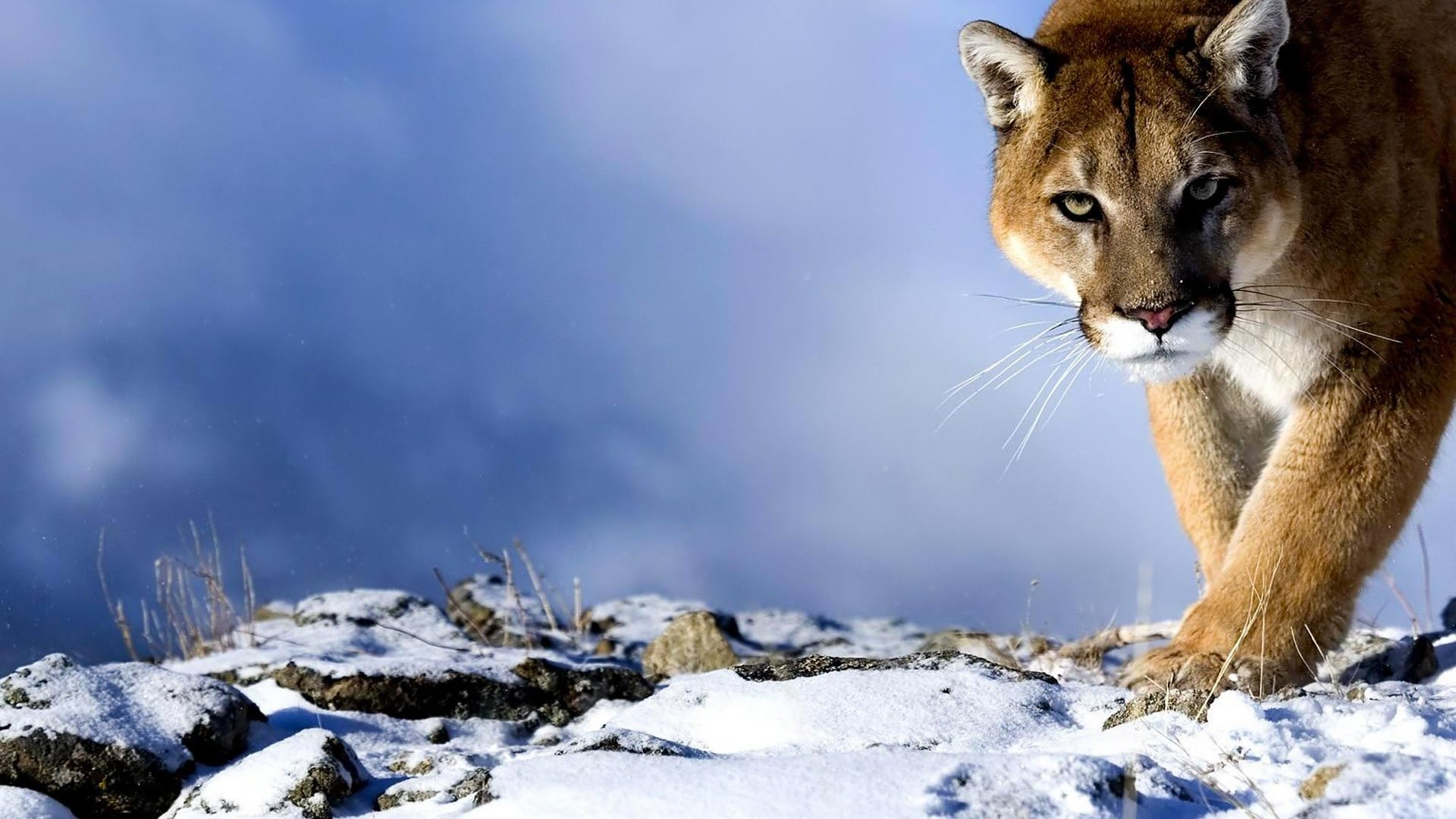 Free Download HD animal Wallpapers,HD animals Images