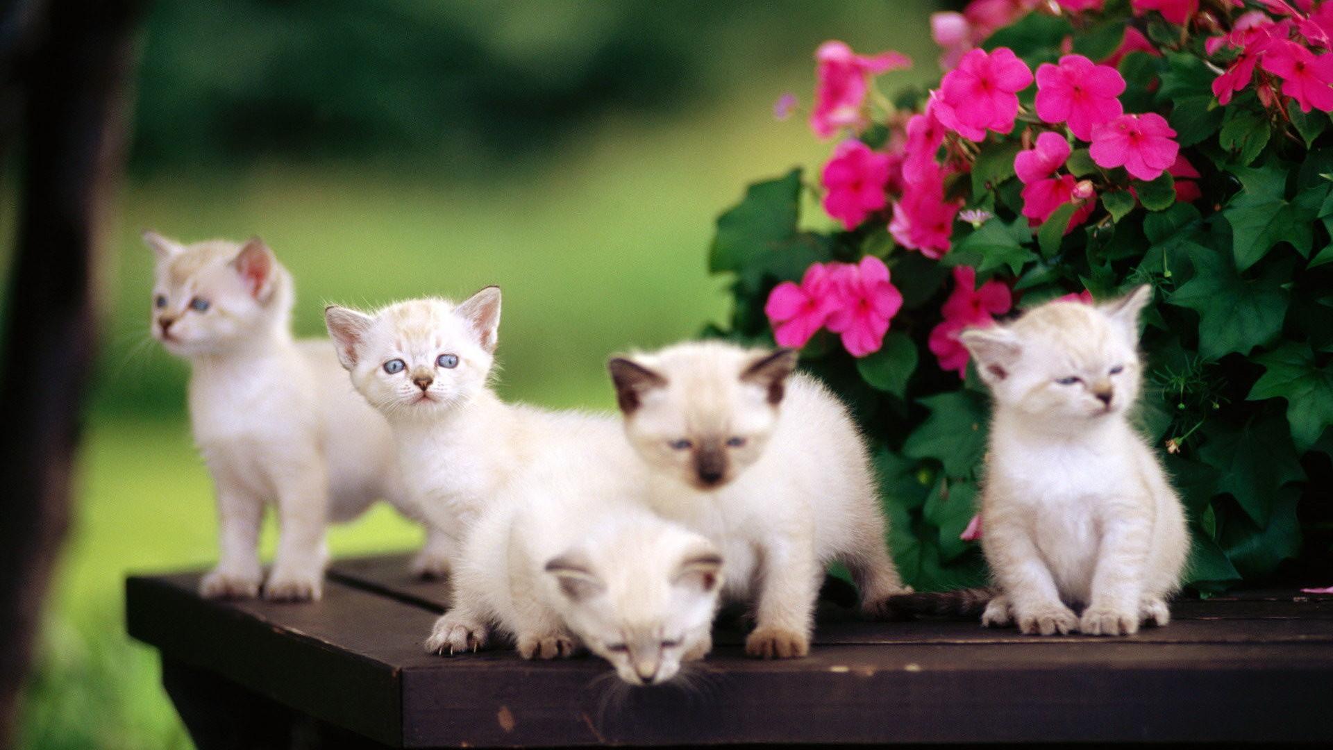 Cute Animals Wallpaper HD