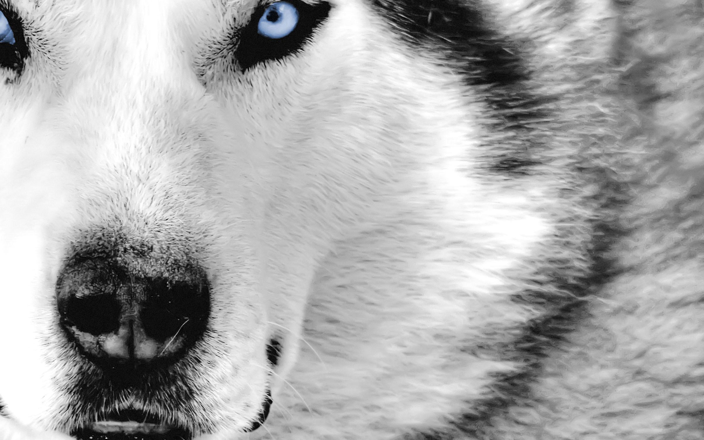 Wolf, Hd Animal Wallpapers, Pet Love, Cool Animals, Desktop Images, Wild