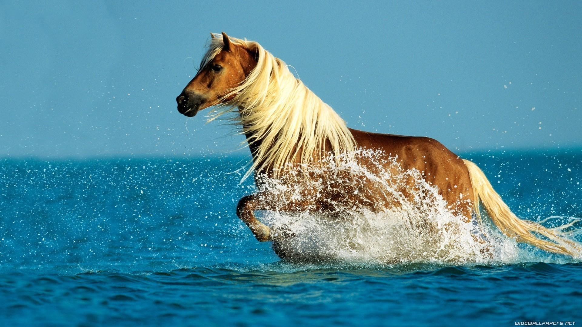 Horse In Ocean
