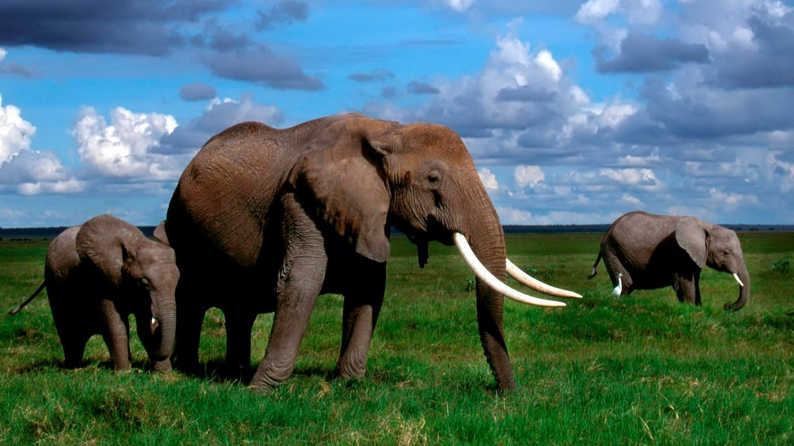Beautiful Nature Animals