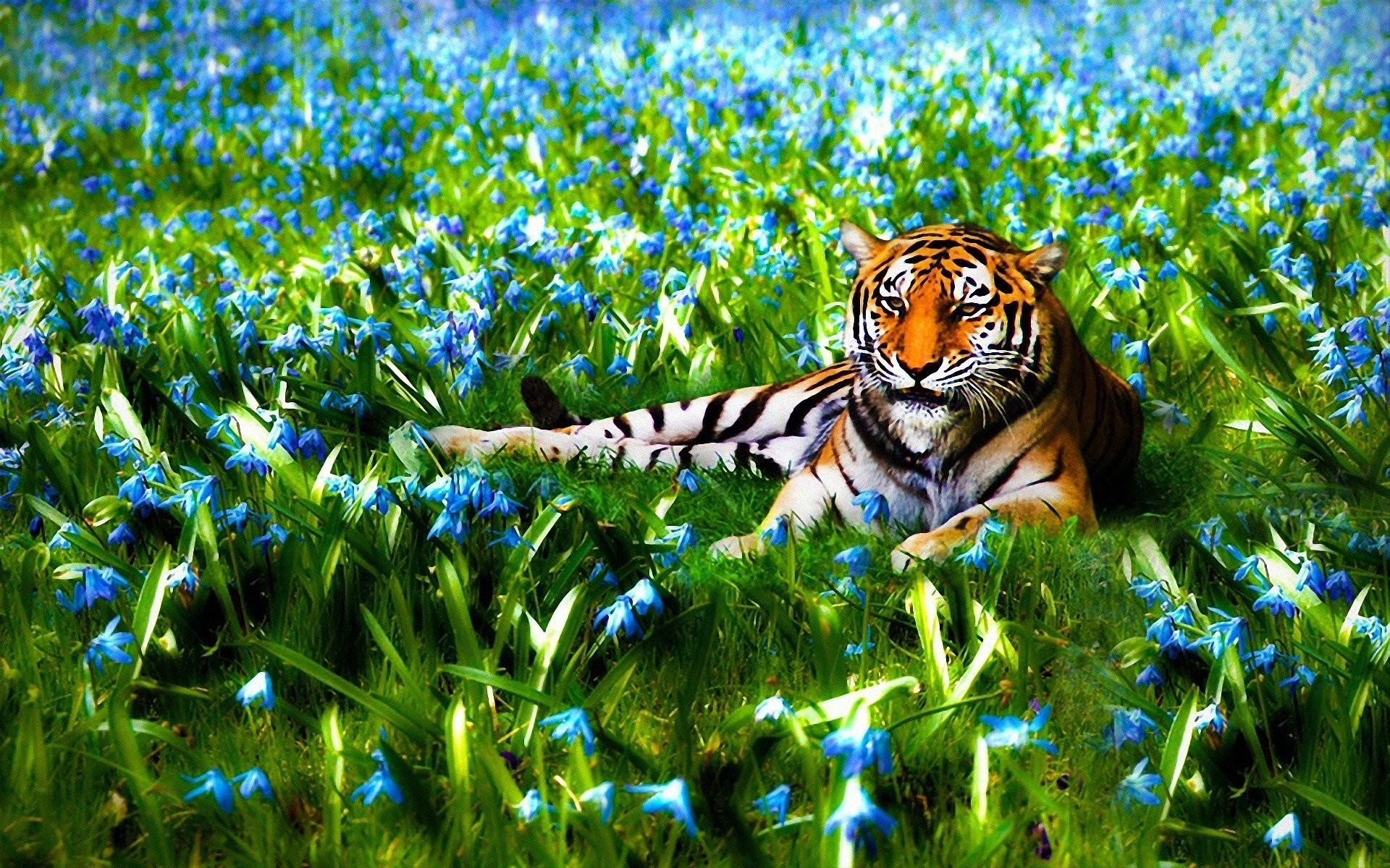 Beautiful Nature – Wallpaper Hd 3d Nature – cool cute nature animal  wallpaper by md.sopon1