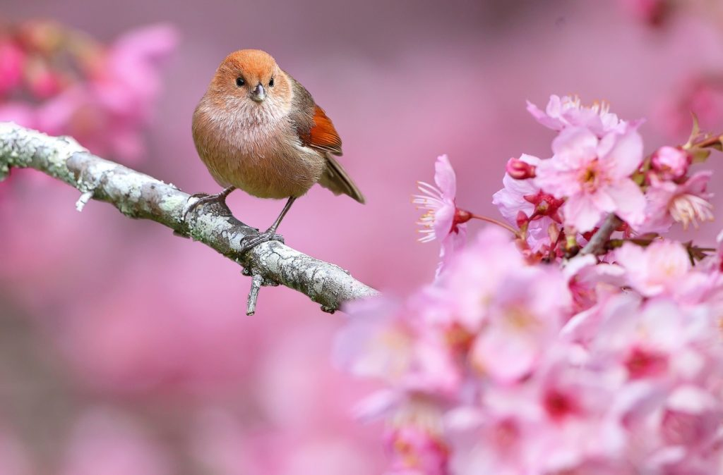animals, Nature, Birds, Flowers, Depth Of Field, Pink Flowers Wallpapers HD  / Desktop and Mobile Backgrounds