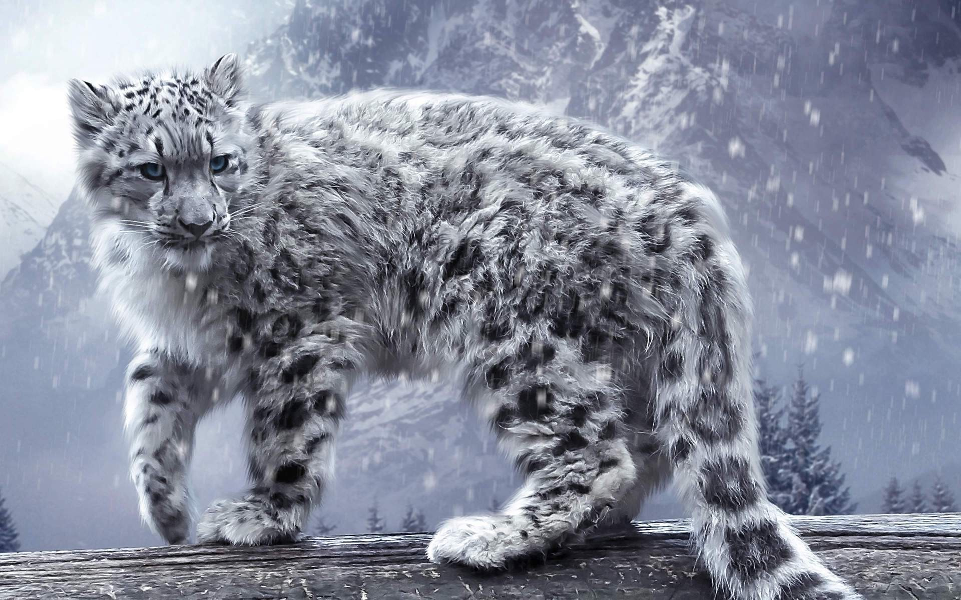leopard, Snow Leopards, Animals, Nature, Snow, Winter Wallpapers HD /  Desktop and Mobile Backgrounds