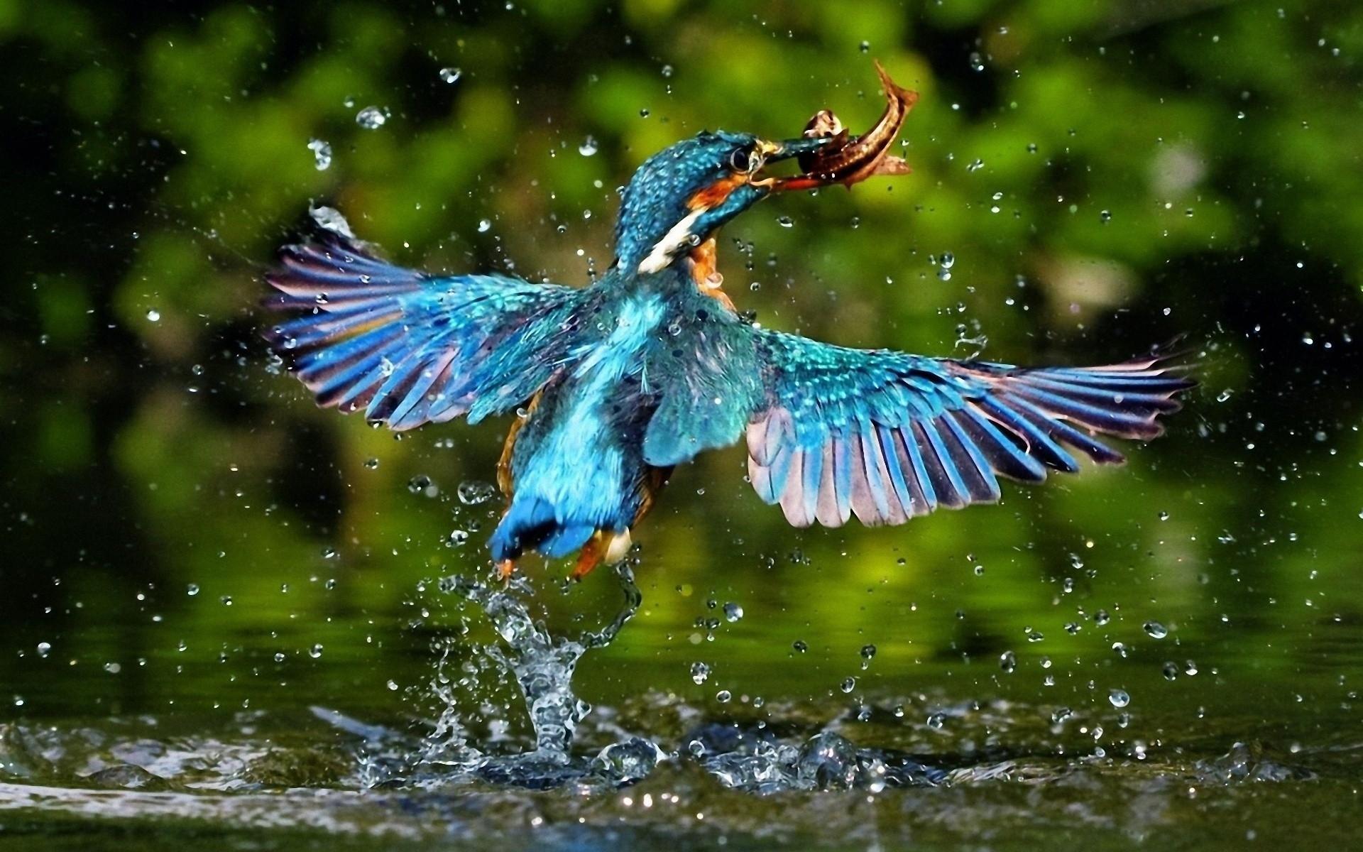 Animal Birds To Catch Fish Wallpaper
