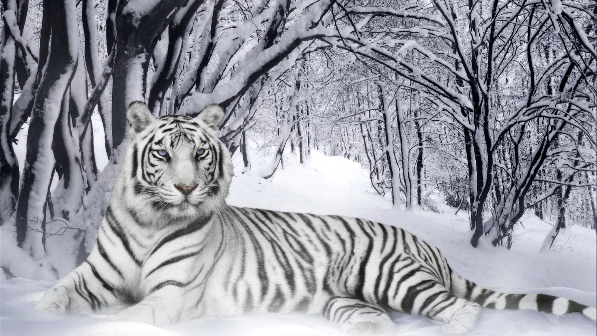 Animal Backgrounds Wallpapers