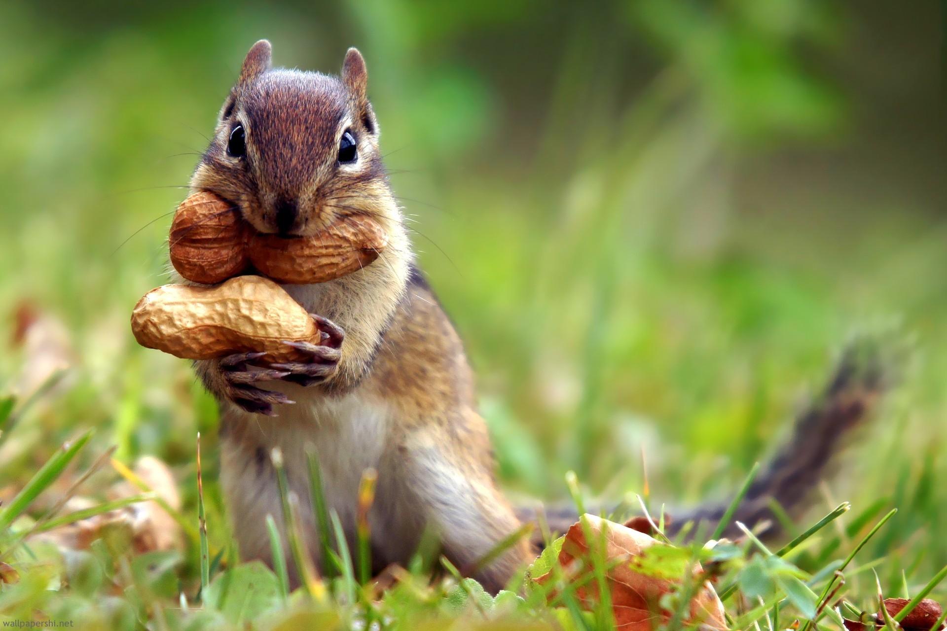 … squirrel-nut-cute-animal-nature-grass-1920×1280