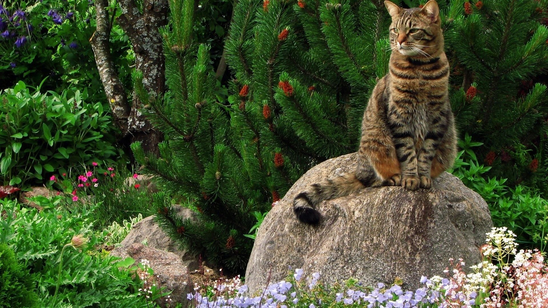 Animal Cat Flower Nature Cute Cats Wallpapers For Mobile – 1920×1200