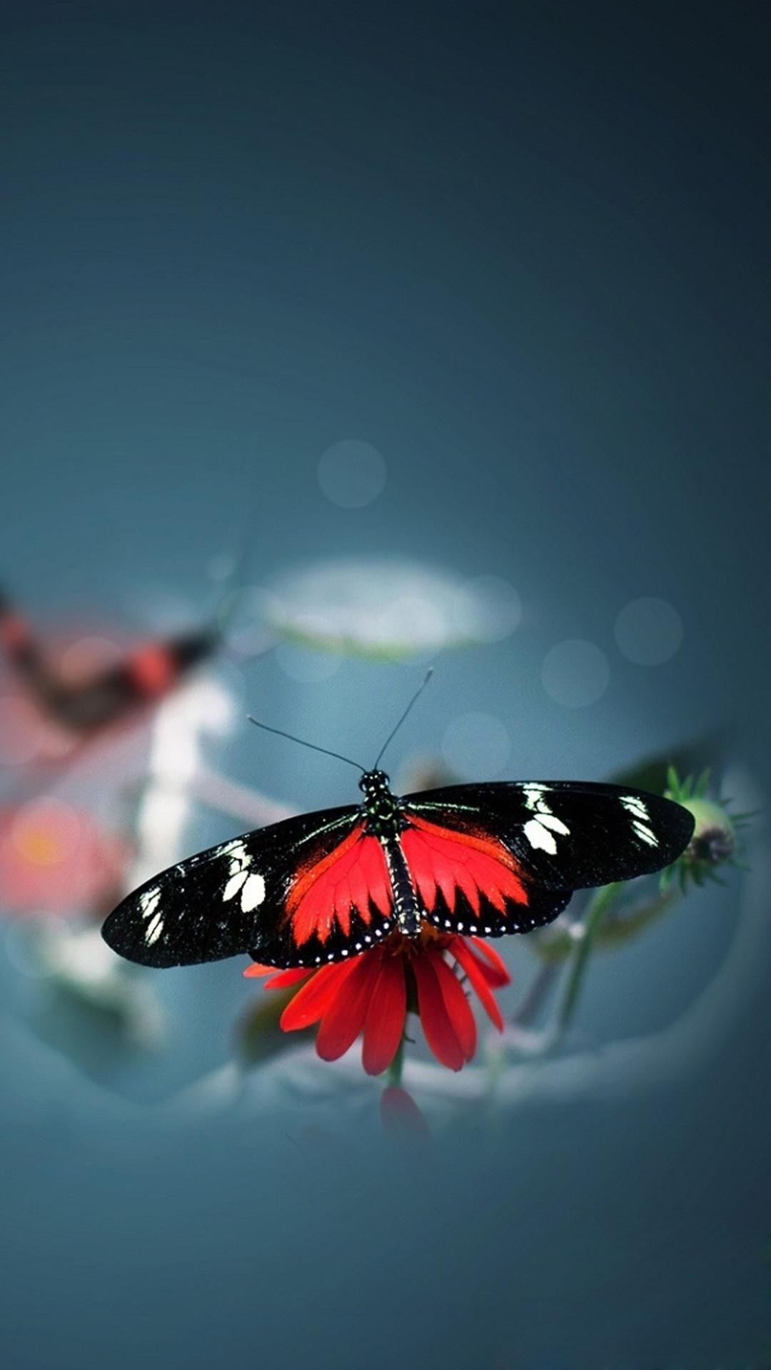 Nature Beautiful Butterfly Animal Flower Water Blur iPhone 6 wallpaper