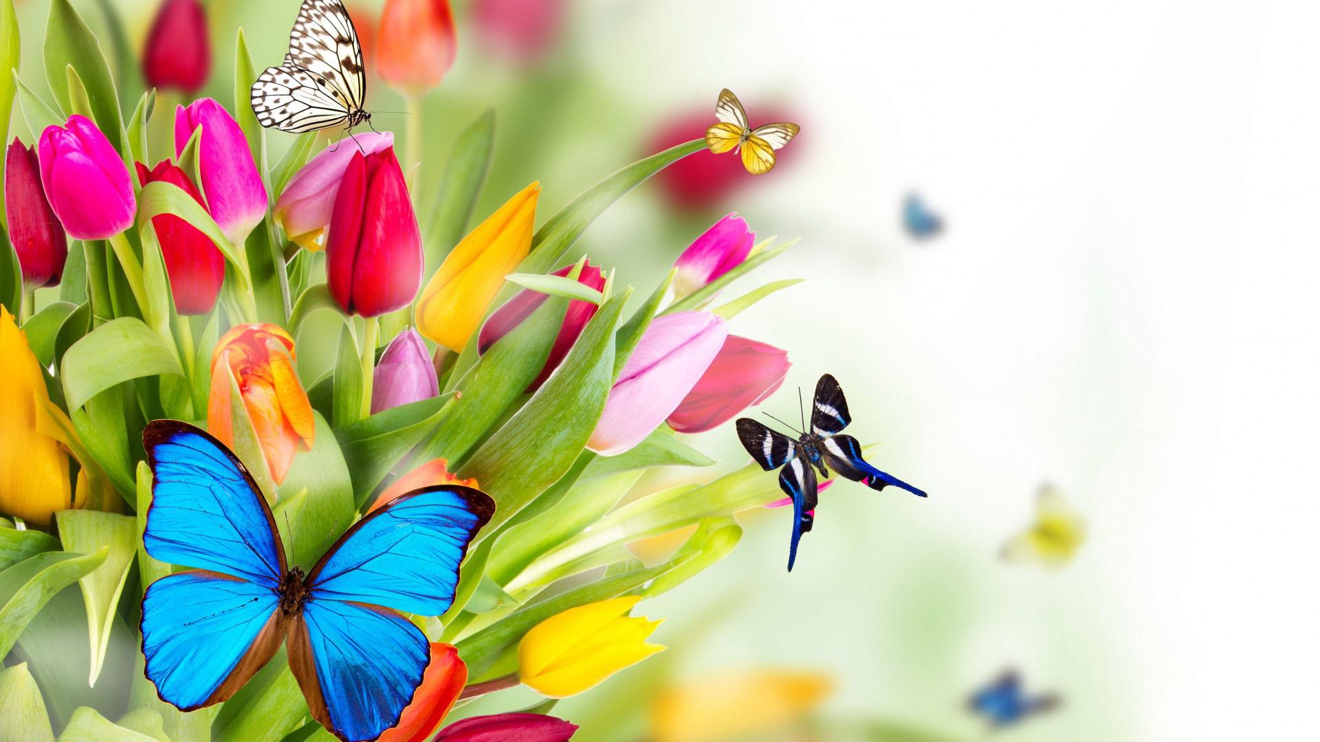 Beautiful butterflies on flowers | | Full HD 169 .