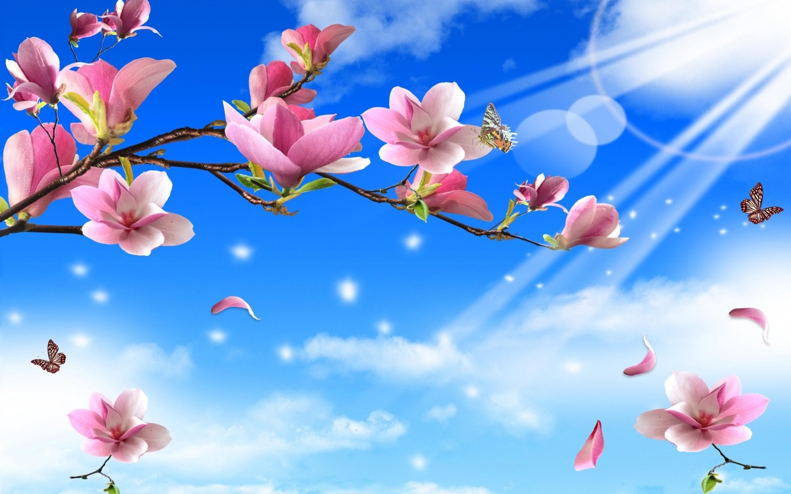 Flowers butterflies nature twigs butterfly wallpaper | | 128172 |  WallpaperUP