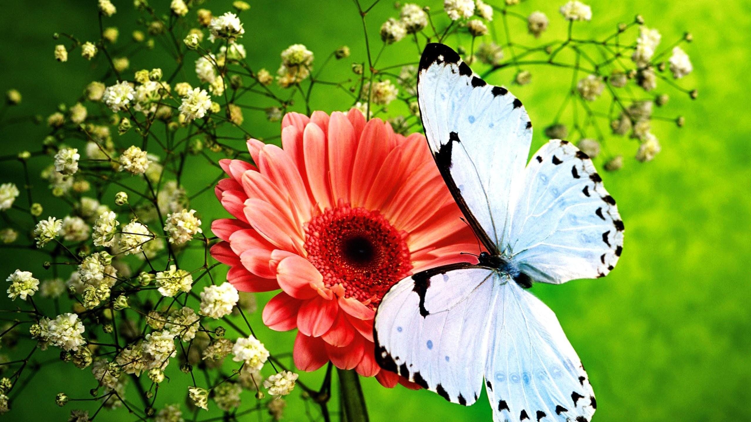 Beautiful Butterfly 764746