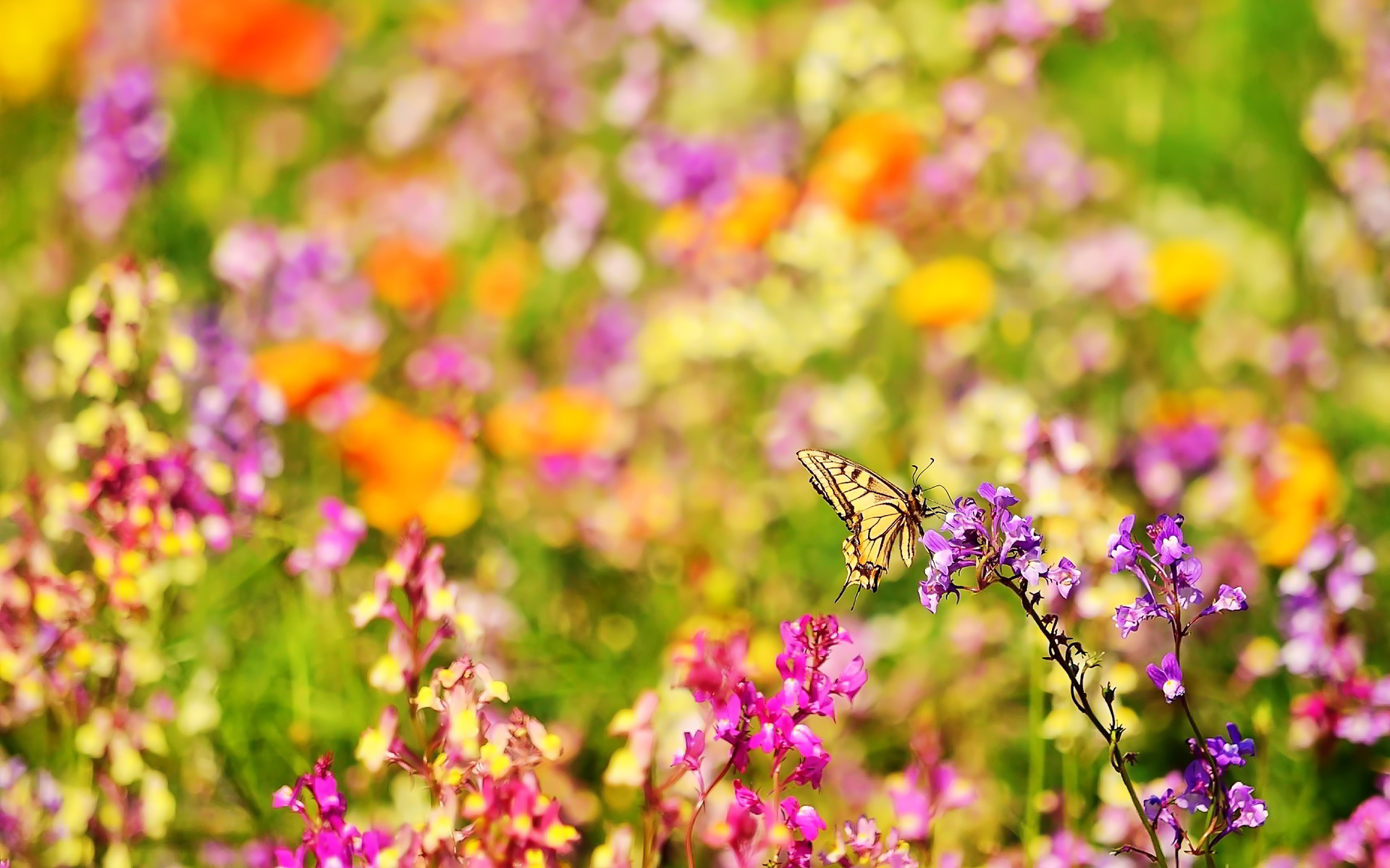Butterfly · butterflies and flowers | Butterfly flowers Wallpapers …