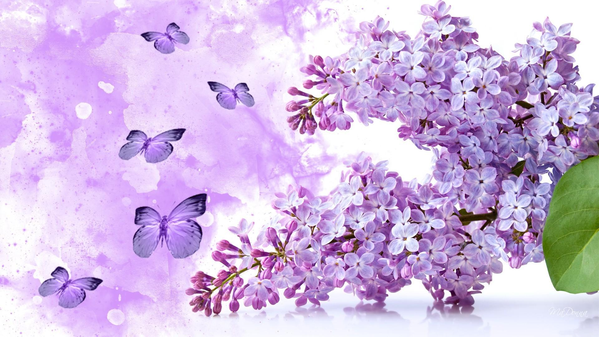 Flowers – Flowers Lilac Purple Butterflies Fleurs Soft Spring Smell  Papillon Fragrant Beauty Sweet Jasmine Flower